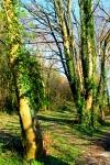 DPP_forest0002